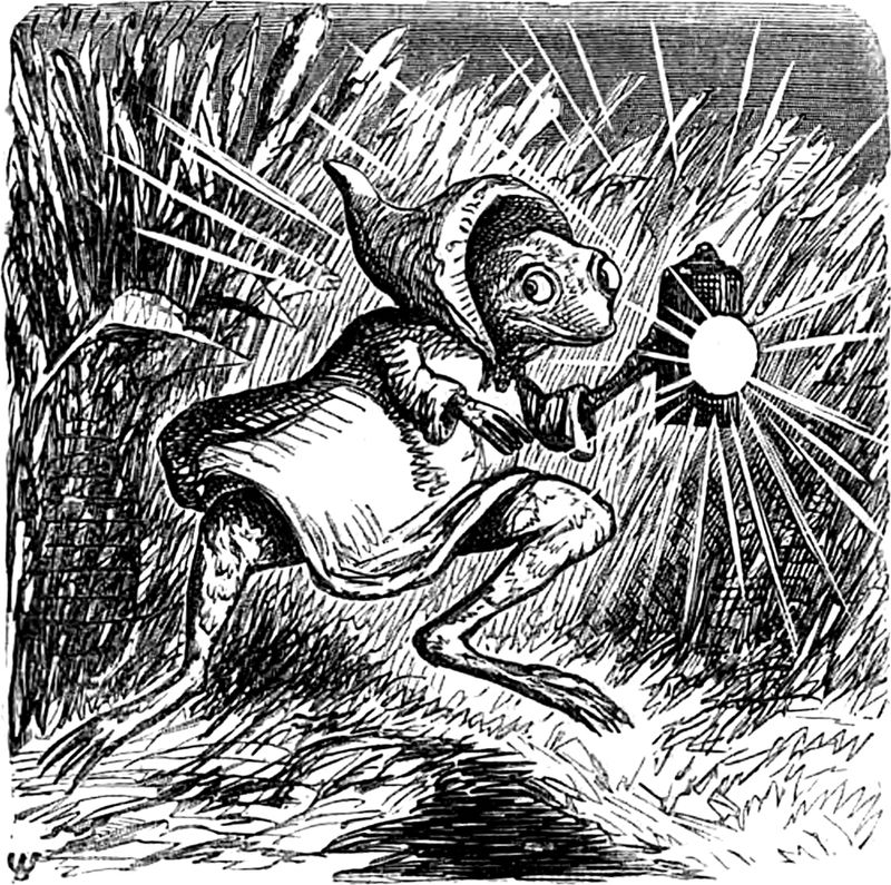 Hermit_frog